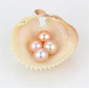 Snh 8-8.5mm AAA Best Grade Peach Color Loose Pearls pictures & photos
