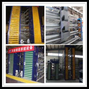 Full Automatic Battery H Type Layer Cage for Hot Sale pictures & photos