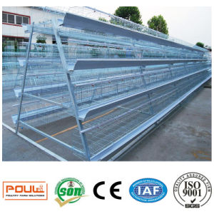 Poultry Farm Equipment or Layer Chicken Cages System pictures & photos