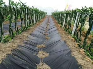 Waterproof Material HDPE Geomembrane pictures & photos