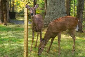 PP/PE Plastic Deer Fence /Anti-UV pictures & photos