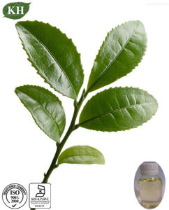 Pure and Natural Tea Tree Oil CAS 68647-73-4 pictures & photos