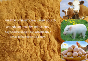 Corn Gluten Meal with 60% Protein Content for Animal Feed Non-GMO pictures & photos