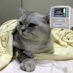 Veterinary Infusion Pump with Touchscreen pictures & photos