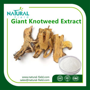 Natural Plant Giant Knotweed Extract 50%, 98%, 99% Resveratrol pictures & photos