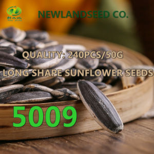 Heath and Edible Sunflower Seeds with Long Type 5009 pictures & photos