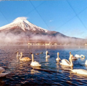 Cheap Price Heat Transfer Sublimation Aluminium Sheet pictures & photos