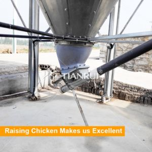 Hot Galvanized Silo for Layers, Broilers and Pullets Breeding pictures & photos