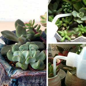 Ilot Plastic Watering Bottle with Long Nozzle for  Succulent  Plants pictures & photos