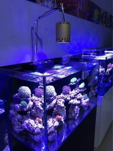 Wholesale 60W Patented Model Aquarium LED Light for Flash Water pictures & photos