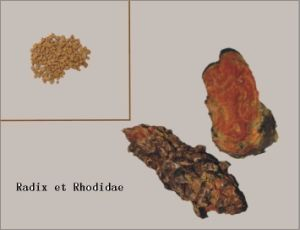 Radix Et Rhodidae Concentrated Granules for Formular