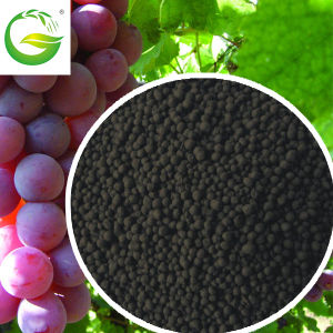 Soluble Organic Fertilizer Humic Acid Granular with NPK pictures & photos