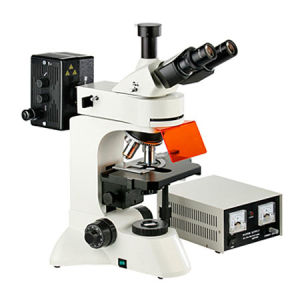 Fluorescence Microscope (MF30)