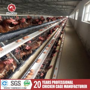 Hot Design Bird Breeding Cages Canary, Chicken Cage pictures & photos