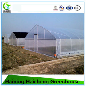 Film Single Span Green House with Hot Galvanized Steel Structure pictures & photos