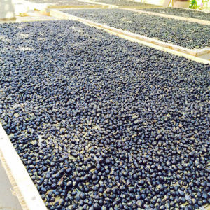 Medlar 100% Black Organic Goji Berries pictures & photos