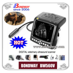 Digital Veterinary Ultrasound Scanner Equine, Bovine, Canine, Faline, Llama, etc pictures & photos