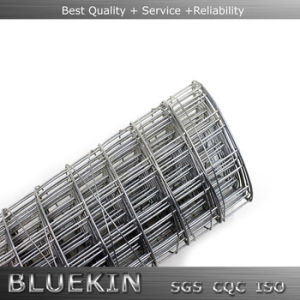 China Top Supplier Welded Wire Mesh in Panel/Roll
