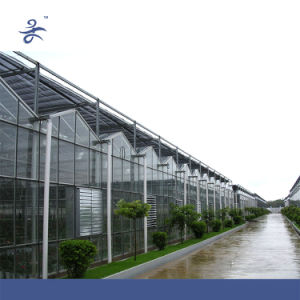Venlo Glass Hydroponic Greenhouse