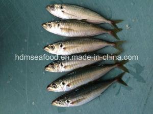 Supply Aquatic Product Frozen Horse Mackerel Fish pictures & photos