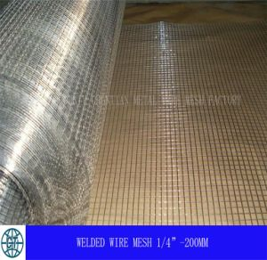 Galvanized Welded Wire Mesh (HP-001) pictures & photos