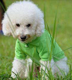 Dog Clothing Light Polo Pet Supply pictures & photos