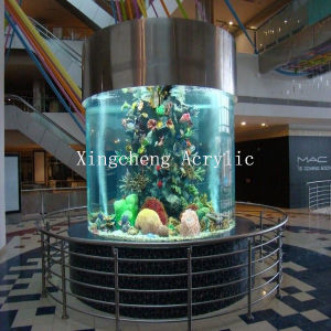 Best-Selling Cylindrial Acrylic Fish Tank pictures & photos