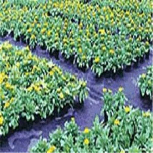 We Manufacture PP Black Anti Grass Cloth/Weed Control Fabric/Mat pictures & photos
