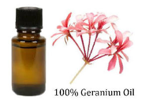 Pure Rose Geranium Essential Oil for Skin Care