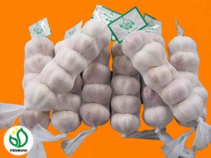 Normal White Garlic 5.5cm 5p (250g/sack) (F12 / F18)