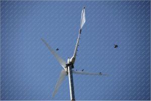 Small 5kw Wind Generator