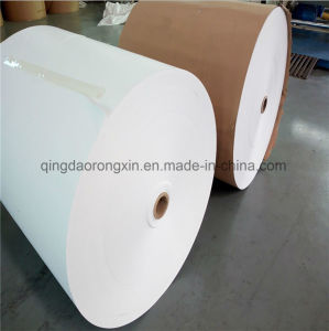 Food Grade PE Coated Paper for Coffee Cup pictures & photos