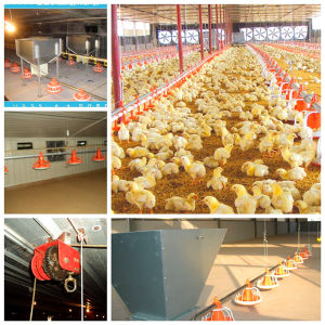 Full Set Chicken Farming Equipment for Nigerian Market pictures & photos