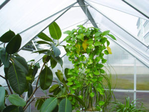 Classic Design Walk-in Green House (SW6) pictures & photos
