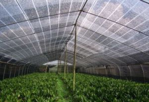 Greenhouse Inside Shading System/Horizontal Shading System Greenhouses/Greenhouse Net/ Aluminum Plastic Shading Net pictures & photos