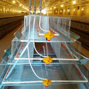 Chicken Cage in Poultry House with H Style and a Style pictures & photos