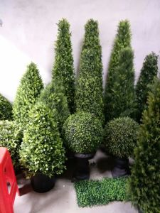 Artificial Plants and Flowers of Boxwood Tree Gu112638 pictures & photos