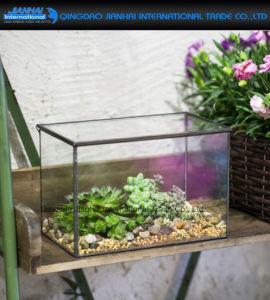 Rectangle Cuboid Clear Glass Geometric Terrarium Glasshouse Planter pictures & photos