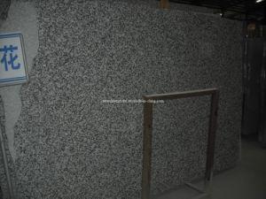 G439 Big White Flower Granite Big Slabs & Tiles