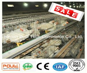 Broiler Chicken Cage with Automatic System and Good Quality & Price (A Type) pictures & photos