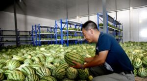Fruit and Vegetable Cold Storage Room pictures & photos