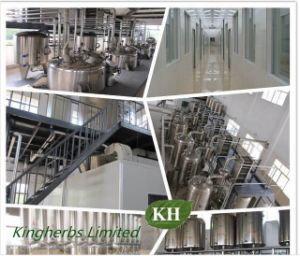 Kingherbs′ 100% Natural Goat′s Rue Extract /Cheese Rennet pictures & photos