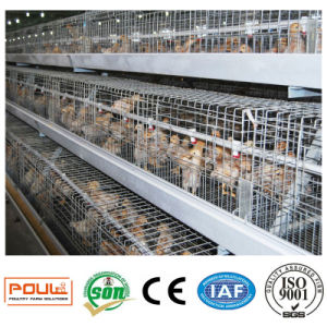 Poultry Farm Equipment or Pullet Chicken Cages System pictures & photos