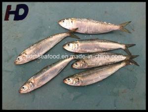 Supply Frozen Fish Sardine Seafood (Sardinella aurita) pictures & photos