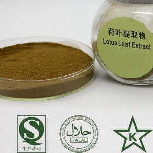 GMP Lotus Leaf Extract Lotus Leaf Alkaloid 2%