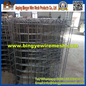 Wire Mesh Deep Processing About Flower Garden pictures & photos