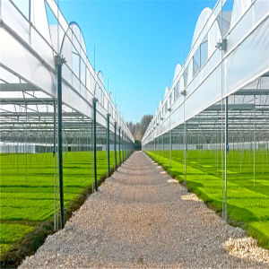 Best Quality Multi Span Greenhouse with Anti-Fogging Plastic Film pictures & photos