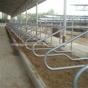 Farm Cow Free Stall Anti Corrosion Acid Proof pictures & photos