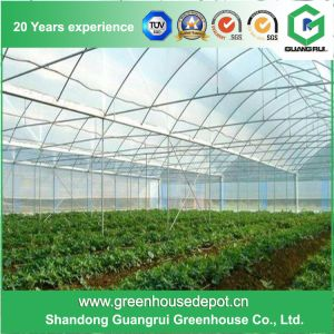 Commercial Multi-Span Film Greenhouse for Flowers and Vegetables pictures & photos