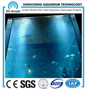 Transparent and Thickness Plexiglass Sheet Used for Ocean Museum Project pictures & photos
